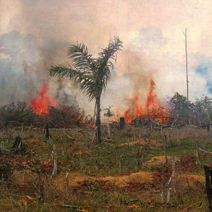 Photo of a fire in Brazil